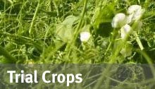 Trial Crops