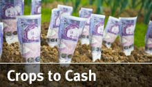 Crops to Cash
